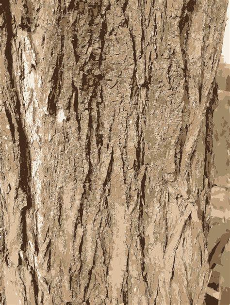 tree bark texture clipart tree bark texture