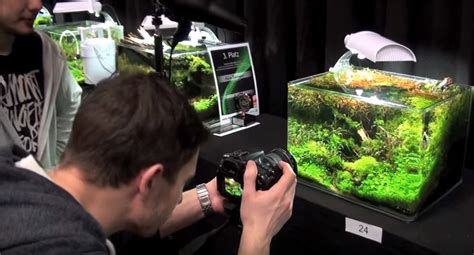 takashi amano aquascaping techniques how to photograph aquascapes