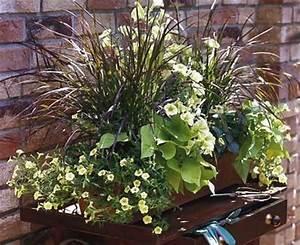 Sommerblumen Für Schatten : balkonkasten mit s kartoffeln petunien und wandelr schen ~ Michelbontemps.com Haus und Dekorationen