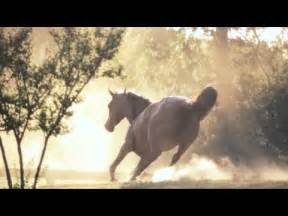Film Most Beautiful Horse Ever