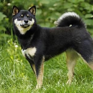 Taille Moyenne Bébé : chien d 39 appartement taille moyenne liste de races ooreka ~ Nature-et-papiers.com Idées de Décoration
