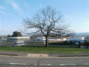 Tree Near Entrance To Fairwater High © Jaggery