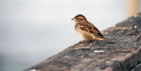 small bird sitting  pier  stock photo public