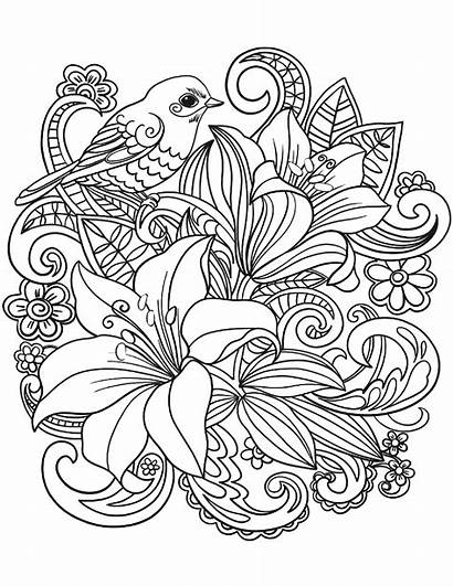 Coloring Pages Adults Floral Bird Bouquet