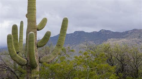 photo cactus foe  cute tucson  image