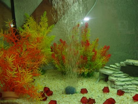 aquarium conseils pour bien entretenir 28 images 7 conseils pour bien entretenir jardin sfr