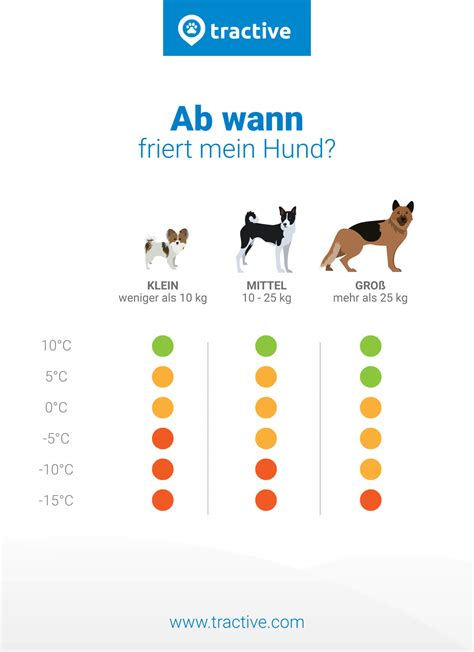 Ab Wann by Ab Wann Friert Mein Hund Wir Kl 228 Ren Auf Damit Du F 252 R Den