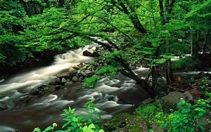 Download, Great, Smoky, Mountains, National, Park, 4k, 5k, 8k