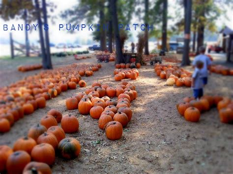 Central Illinois Pumpkin Patches by Pumpkin Patch Southern Illinois Free Software And