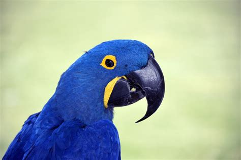 Rio Bird Declared Extinct In The Wild