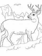 Deer Coloring Pages Print sketch template