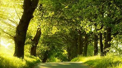 Nature Trees 1080p Road Cool Hdwallpaperfun Screensaver