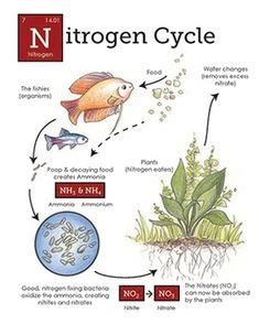 nitrogen cycle images nitrogen cycle cycling