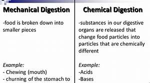 What Is Difference Between Mechanical And Chemical Digestion