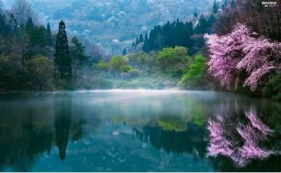 Korea Spring South Morning Lake Trees Fog