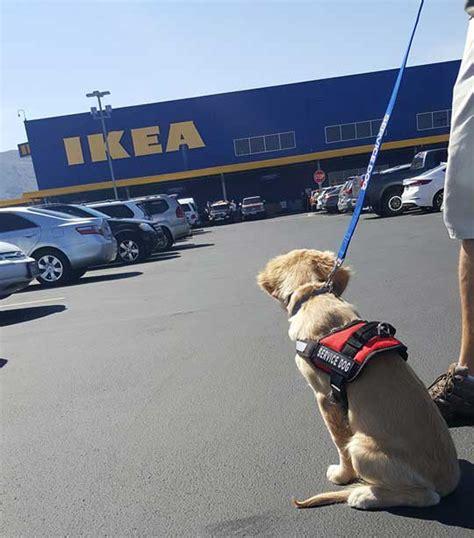 dte dog training elite service dog training franchise