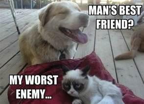 cat lover meme grumpy cat mega compilation 21 pics