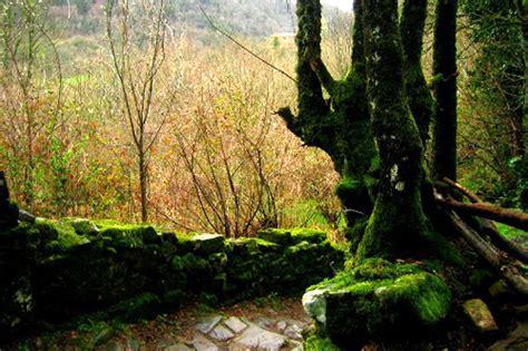 siege bloom slieve bloom magia en el corazón de irlanda taringa