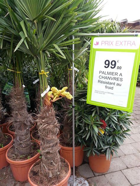 palmier chanvre prix