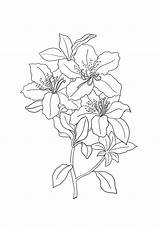 Lily Coloring Pages Tiger Lilies Flower Printable Sheet Getcolorings Getdrawings sketch template