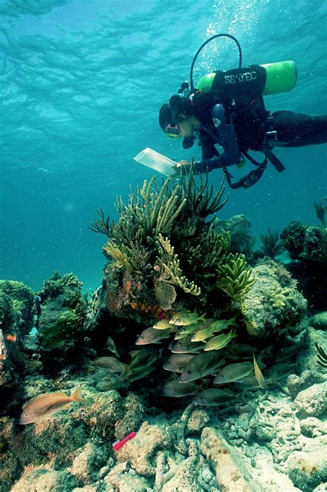 national tortugas dry park florida activities gulf diving snorkeling scuba keys service key mexico diver states united parks west nps