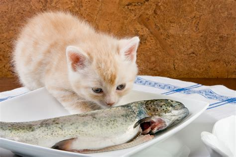 fish allergy  cats symptoms  diagnosis