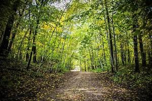 Autumn forest trees road landscape wallpaper | 5472x3648 ...