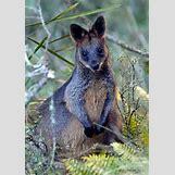 Images Of Land Animals   962 x 1358 jpeg 270kB
