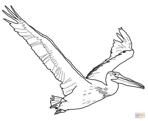 coloriage pelican damerique coloriages  imprimer