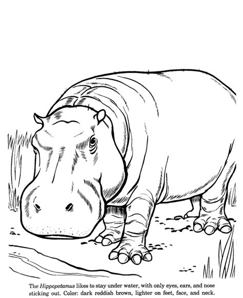 animal drawings coloring pages hippopotamus animal