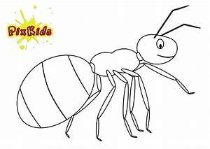 Ameisen Im Winter Finden : ausmalbild ameise kostenlose malvorlage ~ Lizthompson.info Haus und Dekorationen
