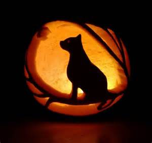 is pumpkin for cats cat pumpkin carving festivities cat