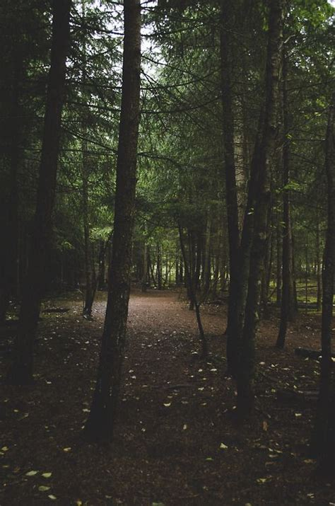 landscape nature forest fade woods nikon   west
