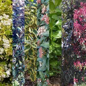 Arbuste Persistant Haie : la haie persistante kit de 10 arbustes mon eden ~ Premium-room.com Idées de Décoration