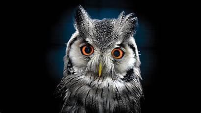 Owl Desktop Resolution Wallpapers13