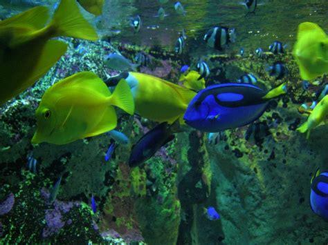aquarium eau douce geant