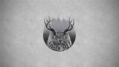 Owl Horns Deer Antlers Background Wallpapers Hipster