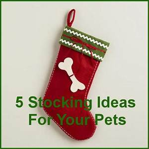 Pet Christmas Stockings 5 Stocking Ideas For Your Pet