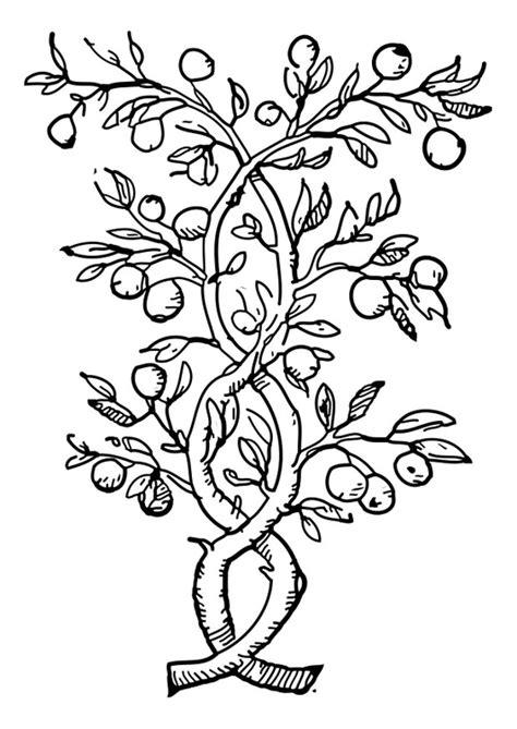 disegno da colorare albero da frutto cat  images