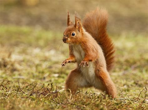 Squirrel Funny Humor Wallpapers Hd Desktop And Mobile
