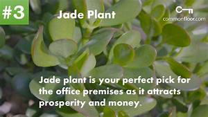 10 Important Feng Shui Plants To Attract Money and ...