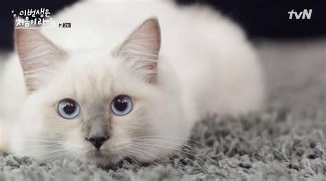Saturday Summary #13 — Cats Not Dogs  Korean Dramaland