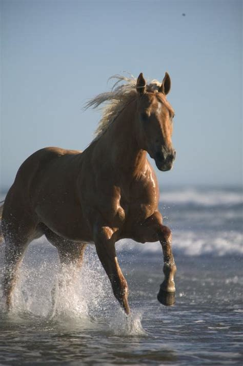 horses wallpapers equine beach running nice outfitters northwest horse entire
