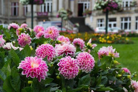garden photography tips  capturing  gardens