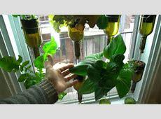 Vertical hydroponic window garden from BioCity News