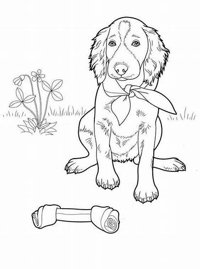 Coloring Dog Pages Sheet Bone Printable Scribblefun