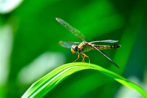si鑒e habitat 14 facts about dragonflies science smithsonian