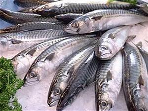 Mackerel as food - Wikipedia