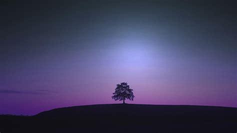 violet hd wallpaper wallpaper high definition high