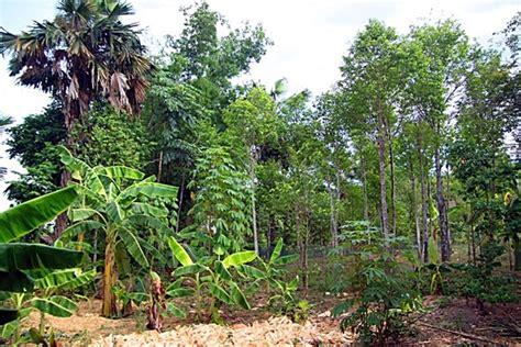 vietnamese farmers  planting trees  annual